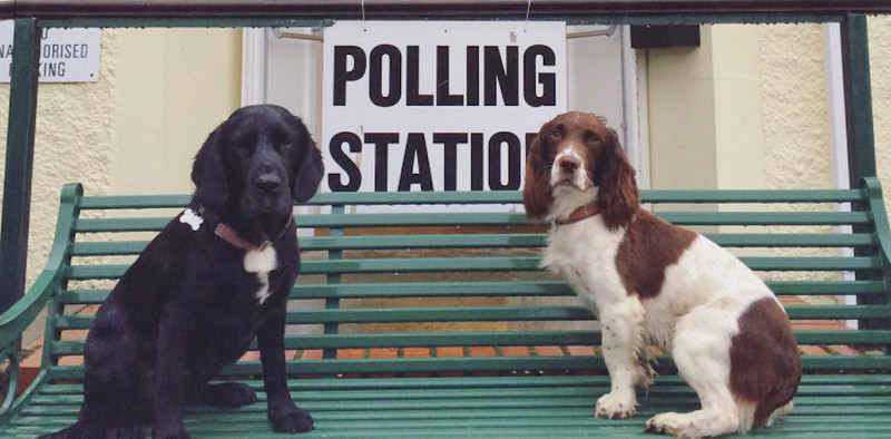 Header dogs at polling stations