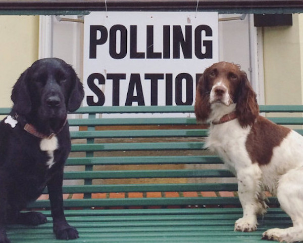 Thumb dogs at polling stations